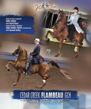 Morgan Grand National 2016 National Horseman Advertiser Gallery