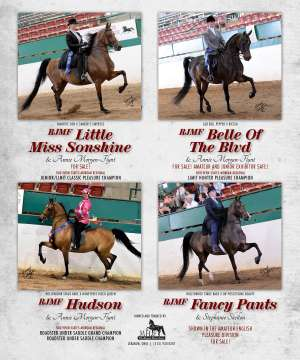 June Extra 2015 National Horseman Advertiser Gallery
