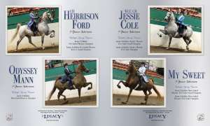 April 2016 National Horseman Advertiser Gallery