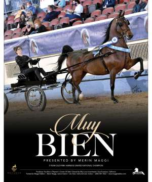 Morgan Grand National 2020 National Horseman Advertiser Gallery