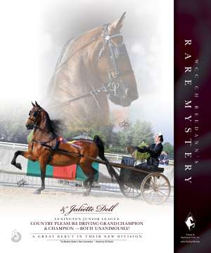 August/Louisville 2020 National Horseman Advertiser Gallery