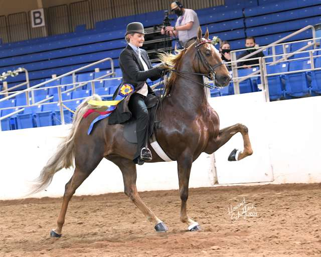 Arrowhead's Up All Night Saddlebred Horse for Sale