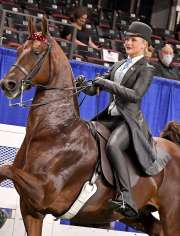 Sunset's Flying Kiss Saddlebred Horse for Sale
