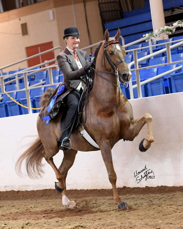 Deputy's Rock And Roll Saddlebred Horse for Sale