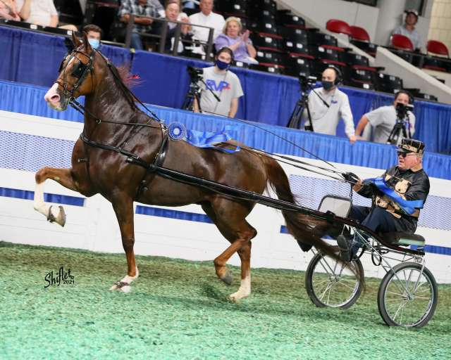 Track Star Road Horse Horse for Sale
