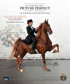 Riverdreams' Picture Perfect Saddlebred