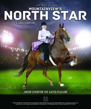 Mountainview's North Star Saddlebred
